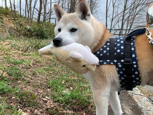 犬 パンじゃなきゃダメ クッション 散歩 小次郎 保護犬 LuckyStar