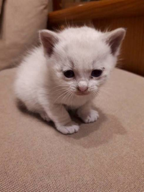 壁から子ネコ ミルクちゃん
