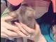 「ネコキックをされております」 叶姉妹、ファビュラスなボディーを子猫のなすがままにされる動画が疲れた心を穏やかにする
