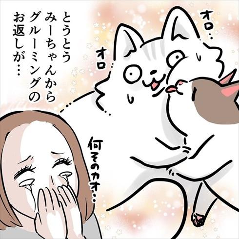ストーカー猫ちゃん