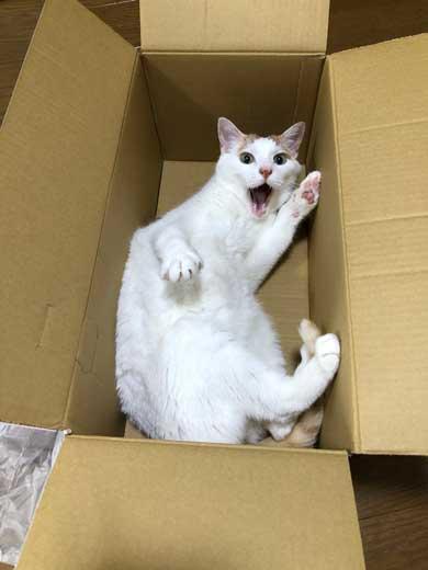 猫 病院に行く 察知 覚悟 表情 驚き ゴロさん 伊佐美ノゾミ