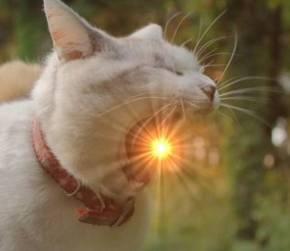 実家のネコ プラズマ火球