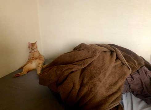 やさぐれ 猫 在宅勤務 構って攻撃 無視 静か すね