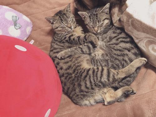 抱き合って眠る双子猫ちゃん