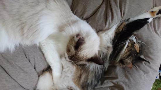 抱き合う2匹の猫ちゃん