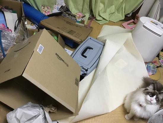 猫ちゃんが暴れた後