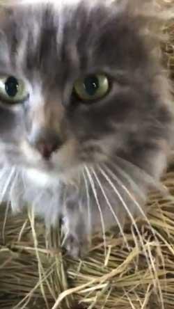 猫 ミルク 飲む 牧場 盗み食い こっそり しめしめ 気づかれていない