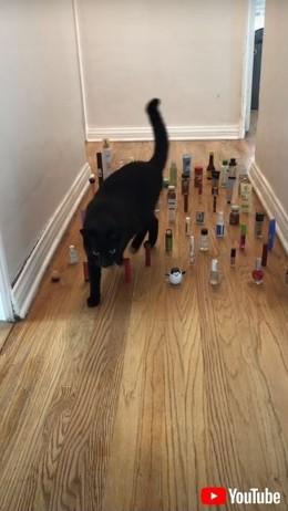 無事に廊下を通過できる? 猫と犬が繰り広げる障害物避けチャレンジが流行