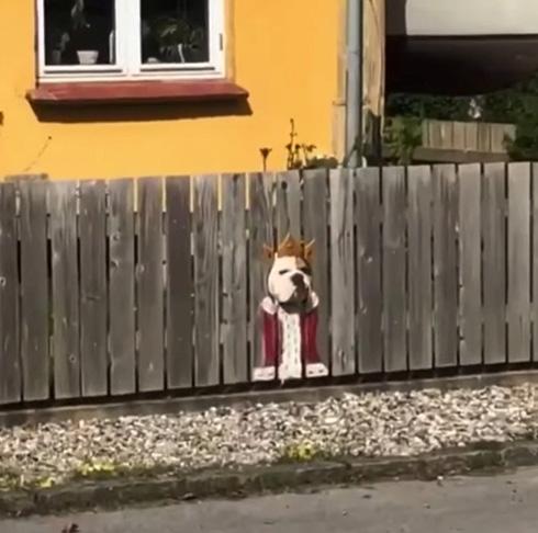 ブルドッグが柵から顔をひょっこり 威厳のない「道ばたの王様」がかわいい