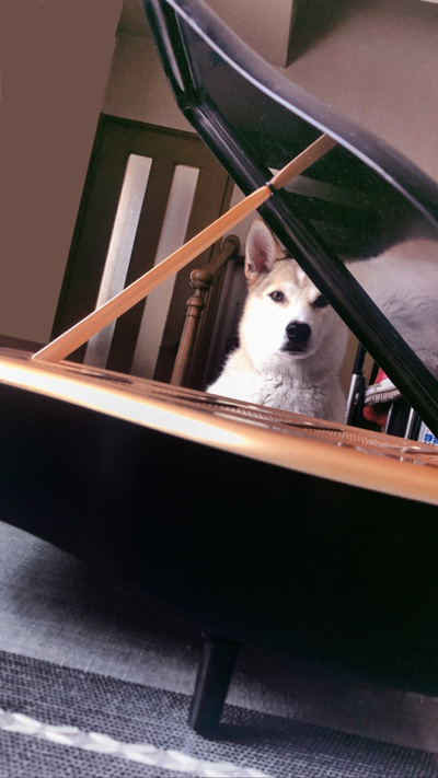 ピアノ越しのわんこ