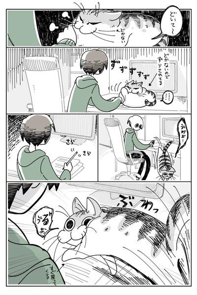 かまってほしいネコ