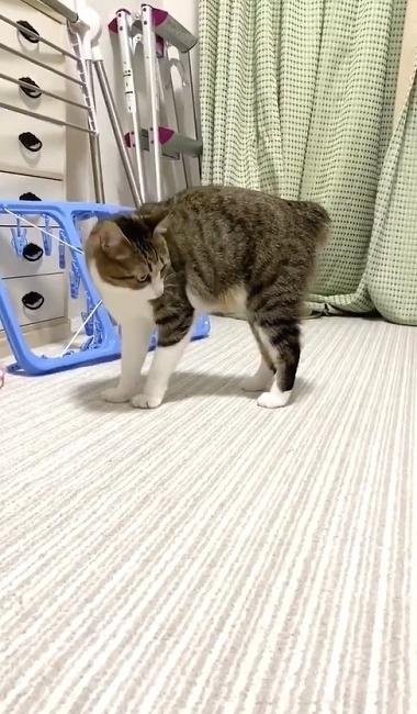 やんのかステップの猫ちゃん