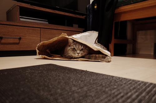 袋入り猫ちゃん