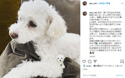 相武紗季 犬 出産
