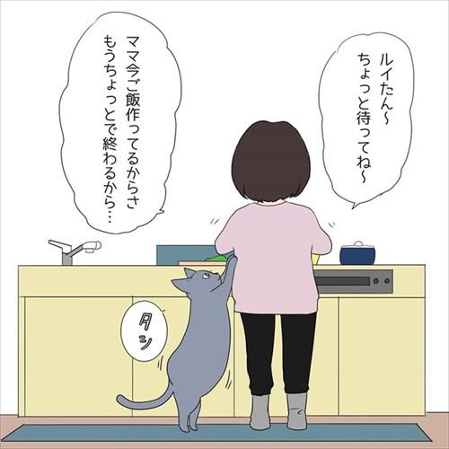 甘えん坊の猫ちゃん