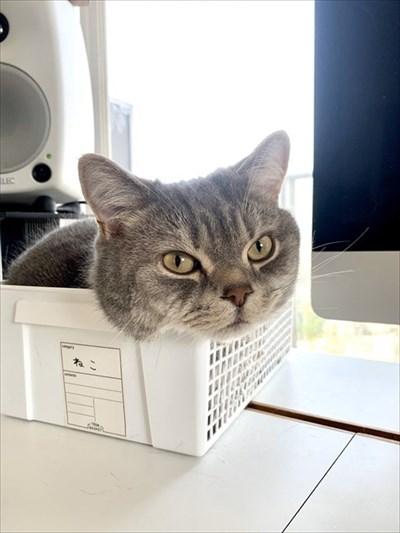 テレワークの邪魔をする猫ちゃん