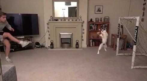 シュートを阻止する猫ちゃん