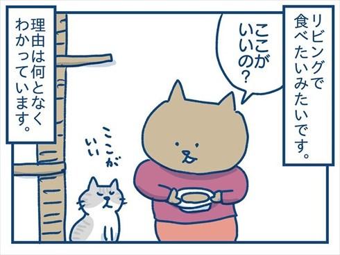 ここで食べたいと主張する猫ちゃん