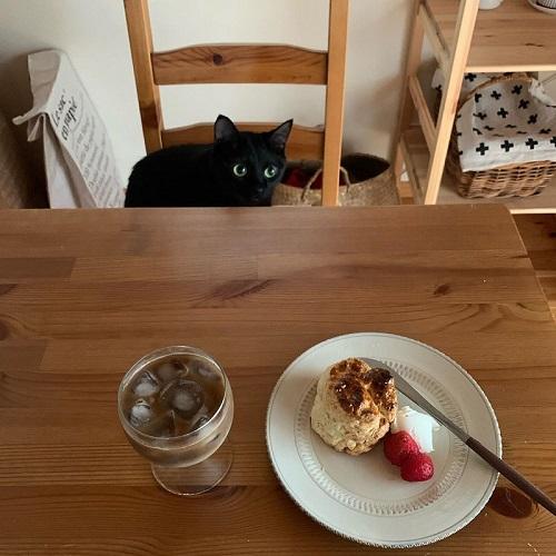 猫とおやつ