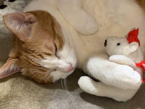 猫 眠い 下僕になでさせてあげないと やさしい