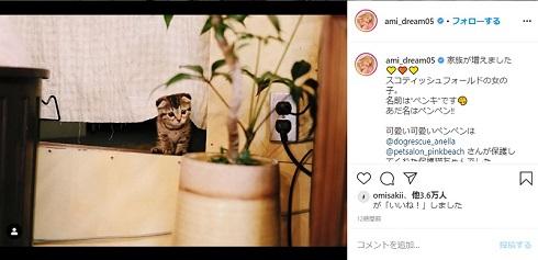 Dream Ami 猫