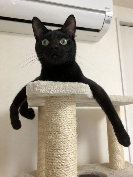 タコさんポーズ猫
