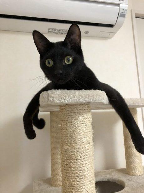 猫 スミちゃん 謎のポーズ
