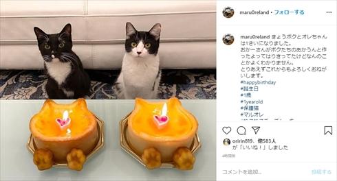 藤あや子 猫 マル オレオ 誕生日 ブログ Twitter インスタ