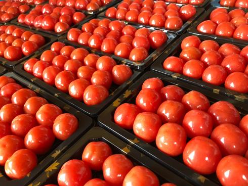 みづの農園のトマト