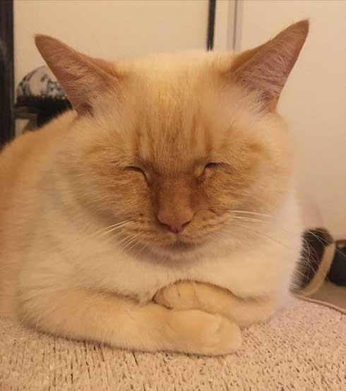 人間味 ネコ 猫 顔 おじさん てと マンチカン