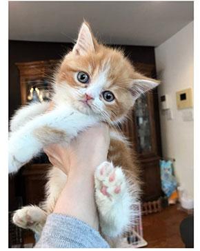 木村花 からあげくん 保護猫
