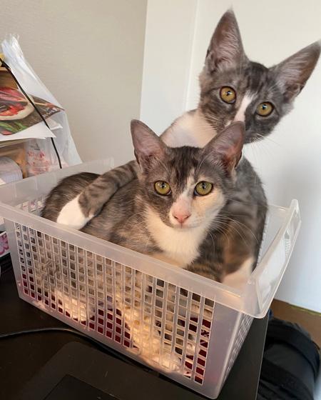 在宅勤務の猫対策