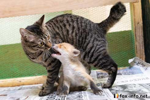 子ぎつね 小狐 猫 抱きしめる ハグ 北きつね牧場 キツネ写真館