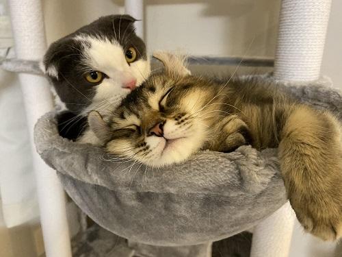 掃除機に怒るかわいい猫ちゃん