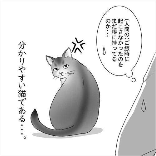 猫の直さん