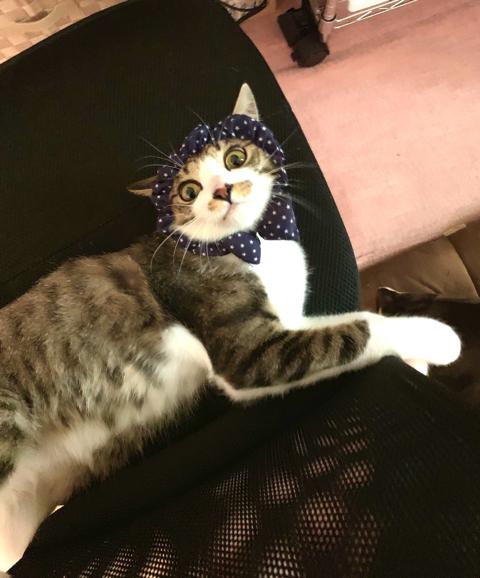 マスク姿の飼い主さんを警戒する猫ちゃん