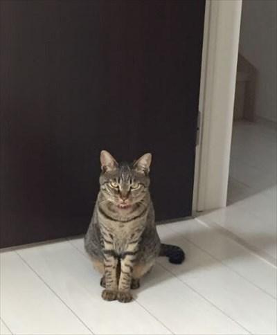 辛抱強い猫ちゃん