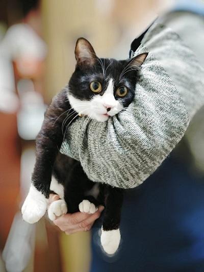 猫 富士丸くん 抱っこにぼうぜん