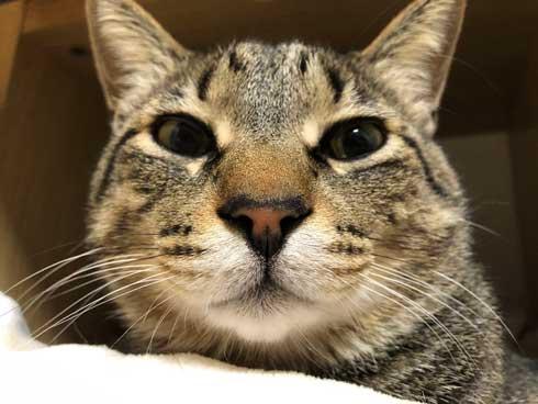 おてておいしい 猫 表情 顔 目力 強い 肉球 吸う おしゃぶり