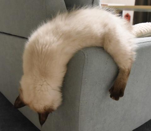 液体ネコちゃん