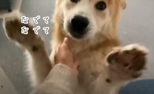 保護犬・福丸くん