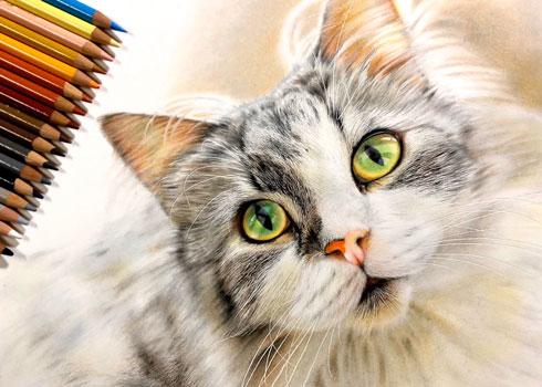 音海はる 猫 色鉛筆画 絵 リアル