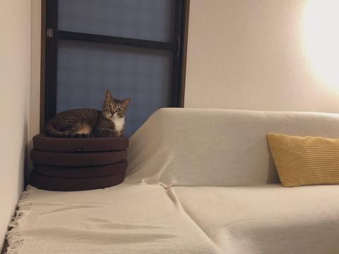 座布団の上のネコちゃん