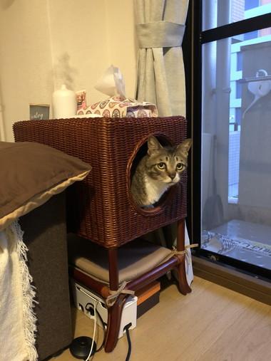 カゴの中ののネコちゃん