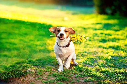 犬のフィラリア予防