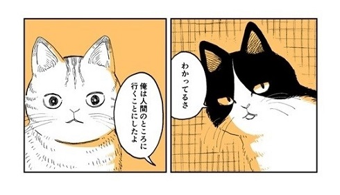 野良のボス猫が保護されようとする話