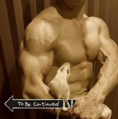 テグーマウス サイドチェスト 筋肉 モフモフ 動物 マッチョ インコ BIGKILLER