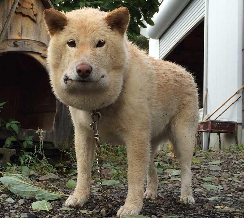 大型 犬 に 噛ま れ た