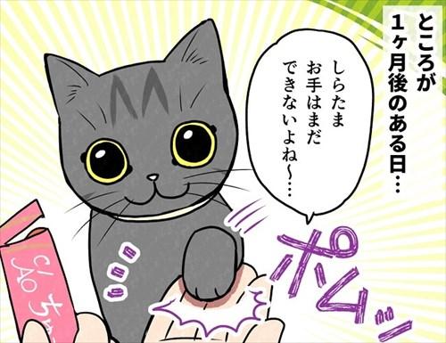 猫にお手を教えた結果