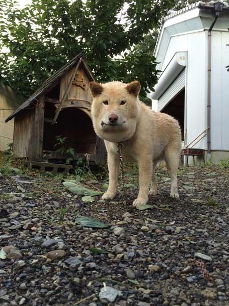 マムシ かまれた 犬 顔 腫れ